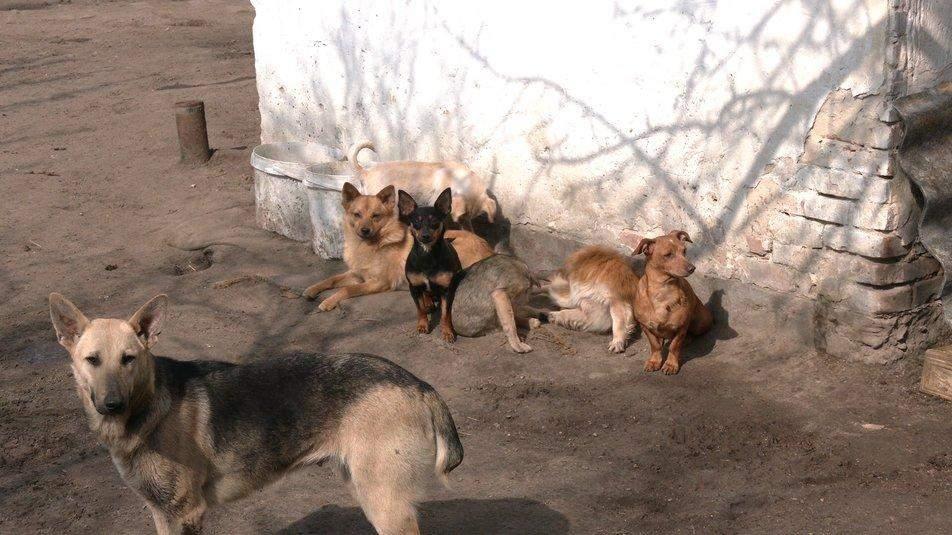 Собаки охороняють подвір'я своїх господарів