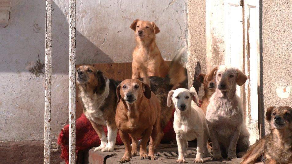 Собак знаходили на звалищах, а деяких – підкинули