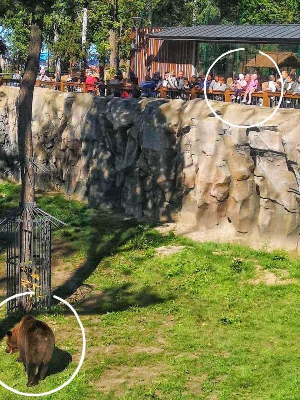 Дітей посадили на огорожу вольєра з ведмедями