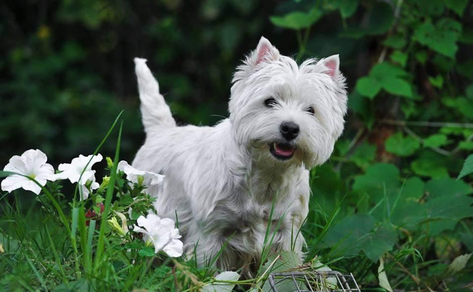 Ці пси добре ладнають з дітьми та іншими тваринами / Фото krutiks.love