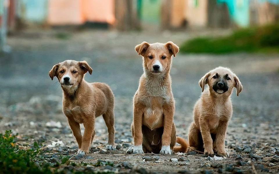 Стерилизация является простым и действенным способом предотвратить появление бездомных животных