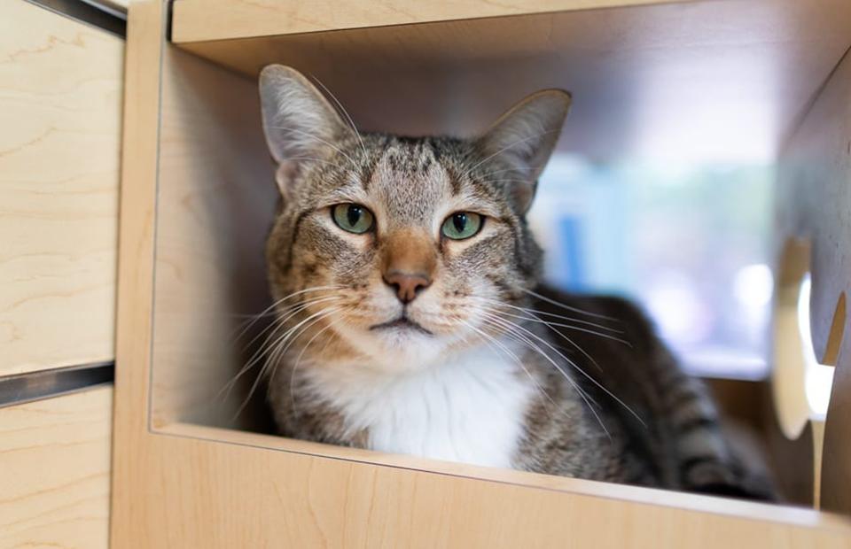 Кота или собаку из приюта придется с нуля учить правилам поведения