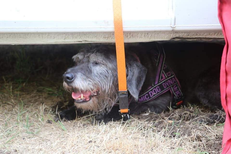 собаки шукають людей під завалами