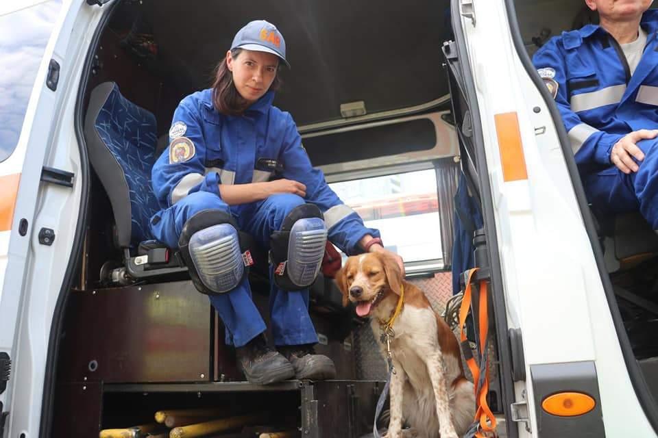собак залучили до пошуків людей під завалами