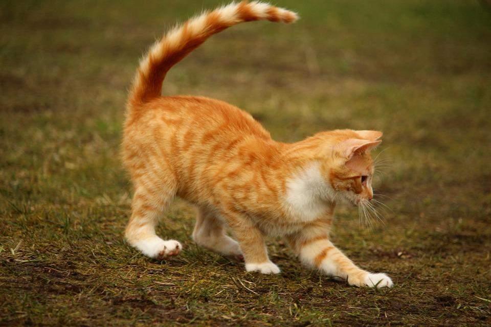 Стерилизованным животным нужна физическая активность