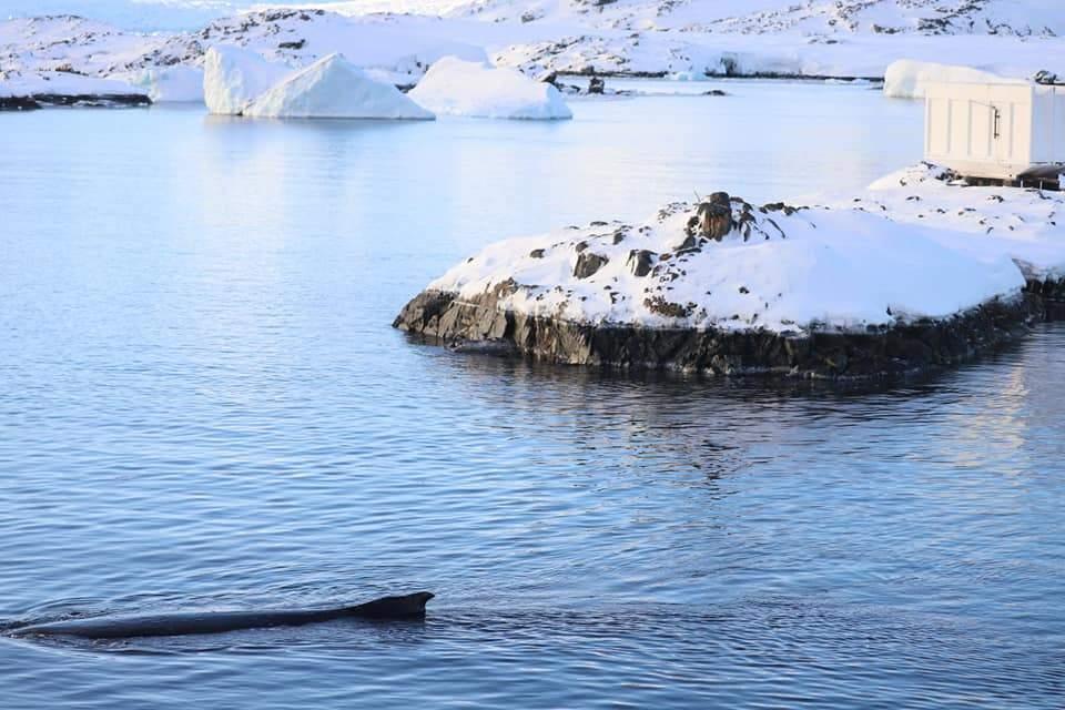 Науковці полюють на фото китів
