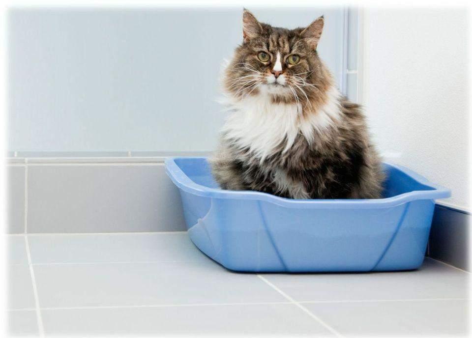 Кіт у лотку