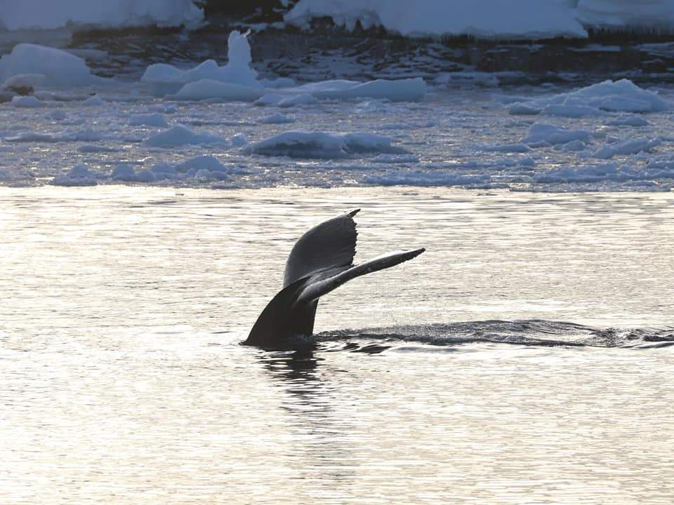 Побачити китів зблизька – велика рідкість