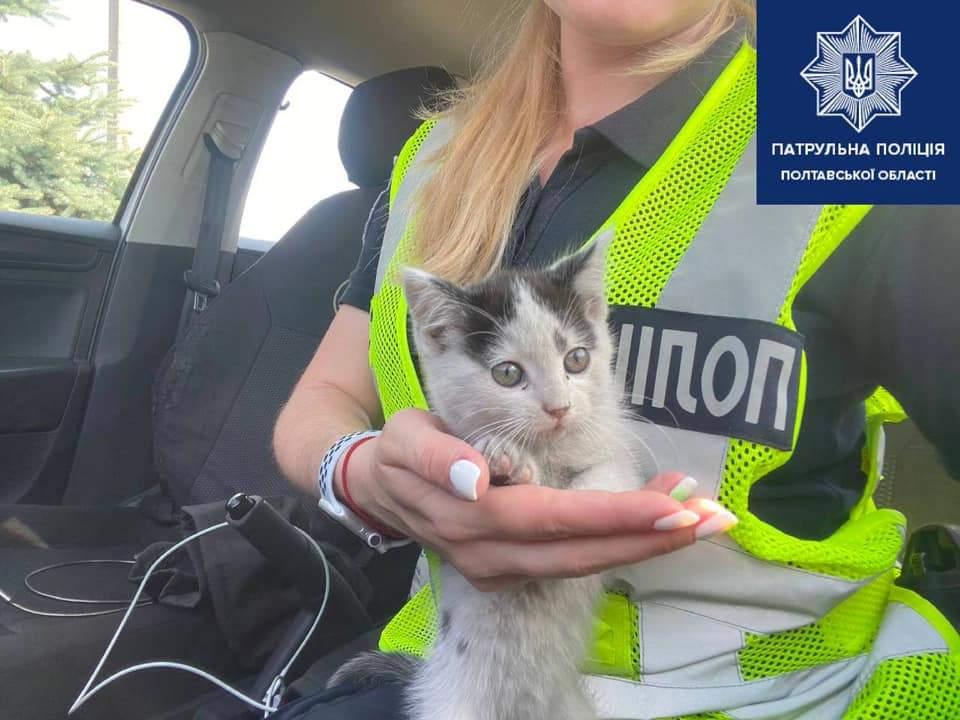 Кошеня у патрульної на руках
