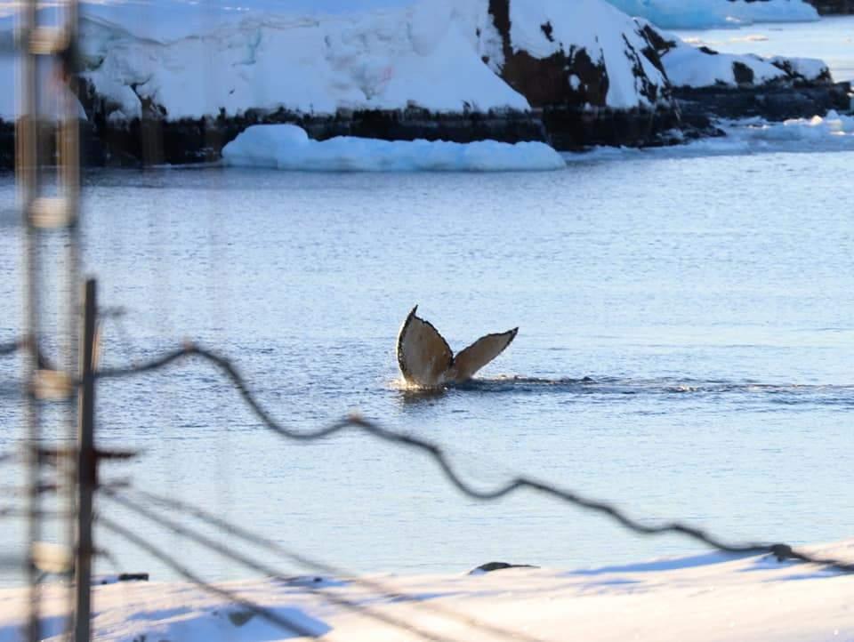 Малюнки на хвостових плавниках китів