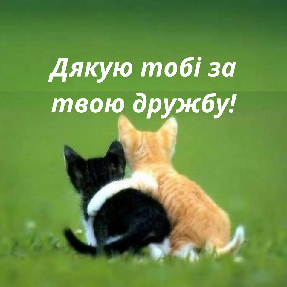 Міжнародний день дружби приколи