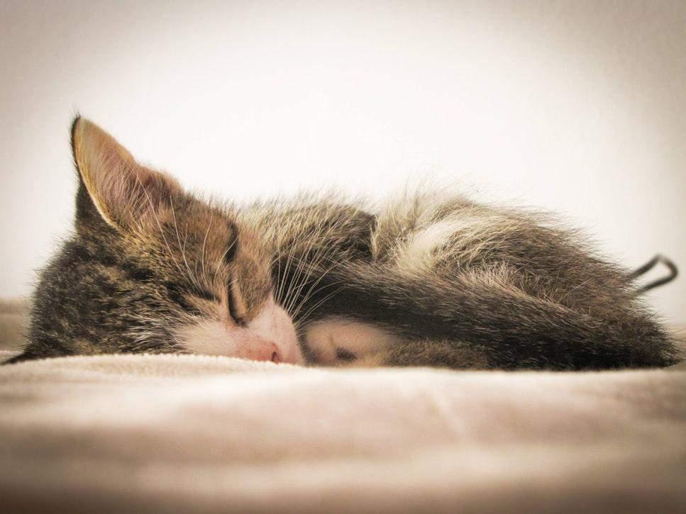 Котик обіймає себе хвостиком для затишку