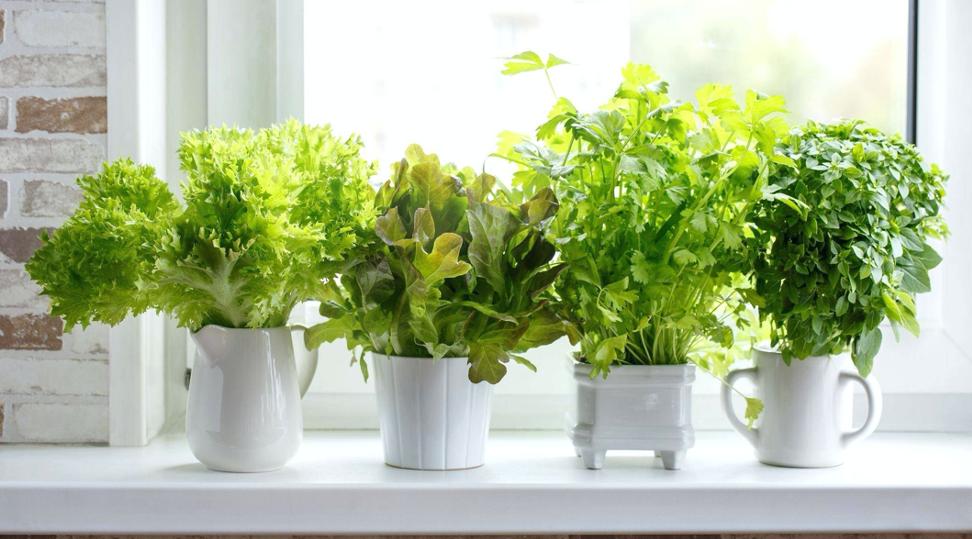 Можно выращивать пряности в ненужном посуде