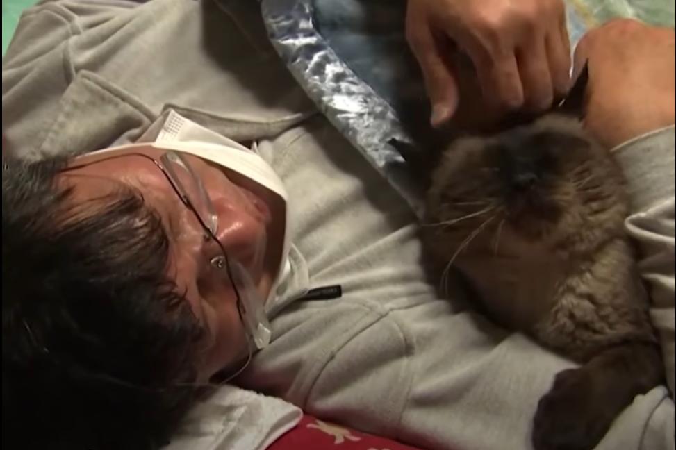 Като мечтает прожить столько, сколько будут жить его кошки