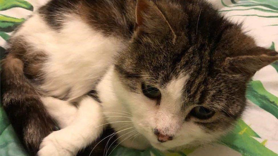 Британский студент нашел в своей комнате кошку