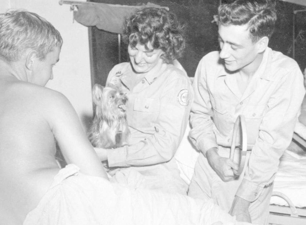 Собака служила в госпіталі, допомагаючи відновлювати фізичне та психічне здоров'я солдатів